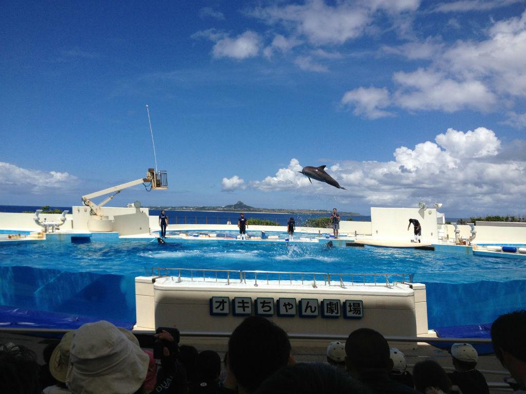 Okinawa Aquarium dolphin show
