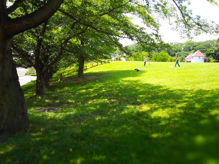 Beautiful picnic spot