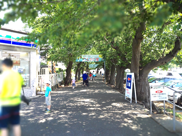 Tree-lined path from the station to Kodomono Kuni