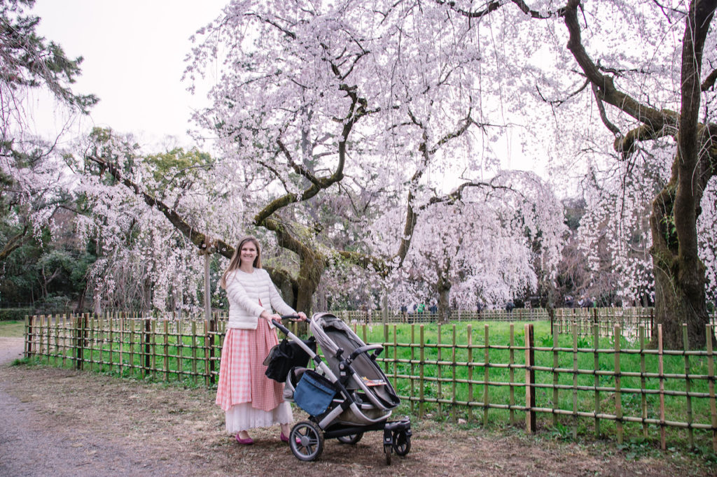 Kyoto Gyoen weeping cherry blossoms