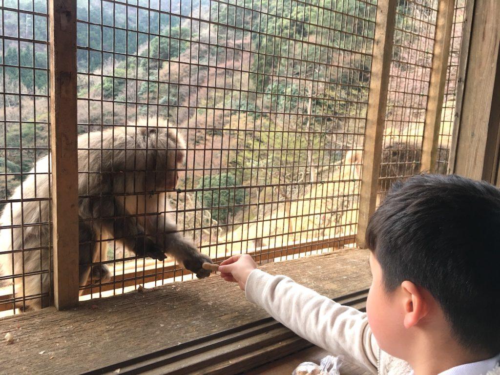Arashiyama Monkey park feeding