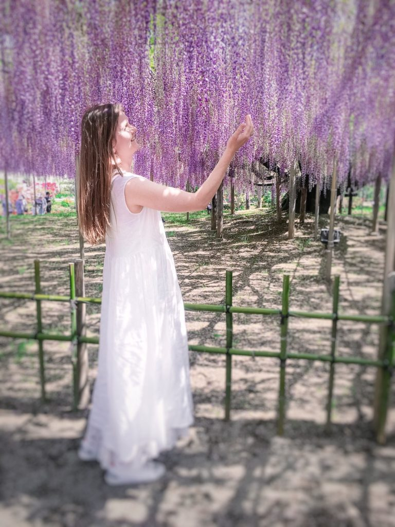 Ashikaga Flower Park purple wisteria