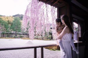 Kyoto Guide Kodaiji Temple with kids weeping cherry blossom